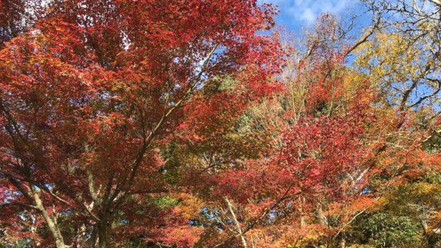 大元公園の紅葉